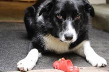 Shopfront pup, Hay-On-Wye